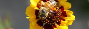 Monsanto Bee Colony Collapse